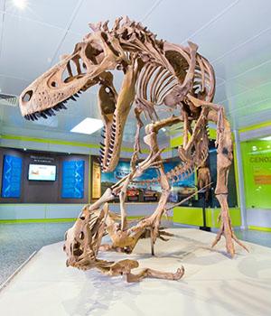 Museo de Historia Natural- Sala Historia de la Vida (Foto y enlace)